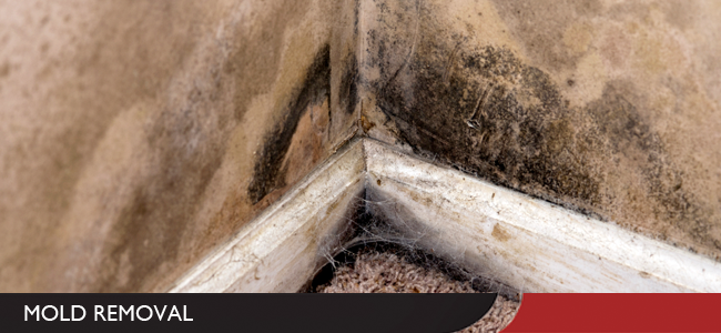 Mold Removal and Remediation in Evansville