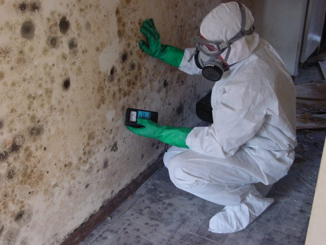 free mold inspection hasgoe cleaning systems in evansville. Black Bedroom Furniture Sets. Home Design Ideas