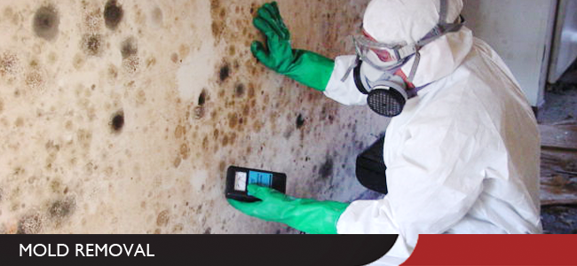 Mold Removal in Evansville, IN