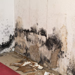 Mold Removal in Evansville, Indiana