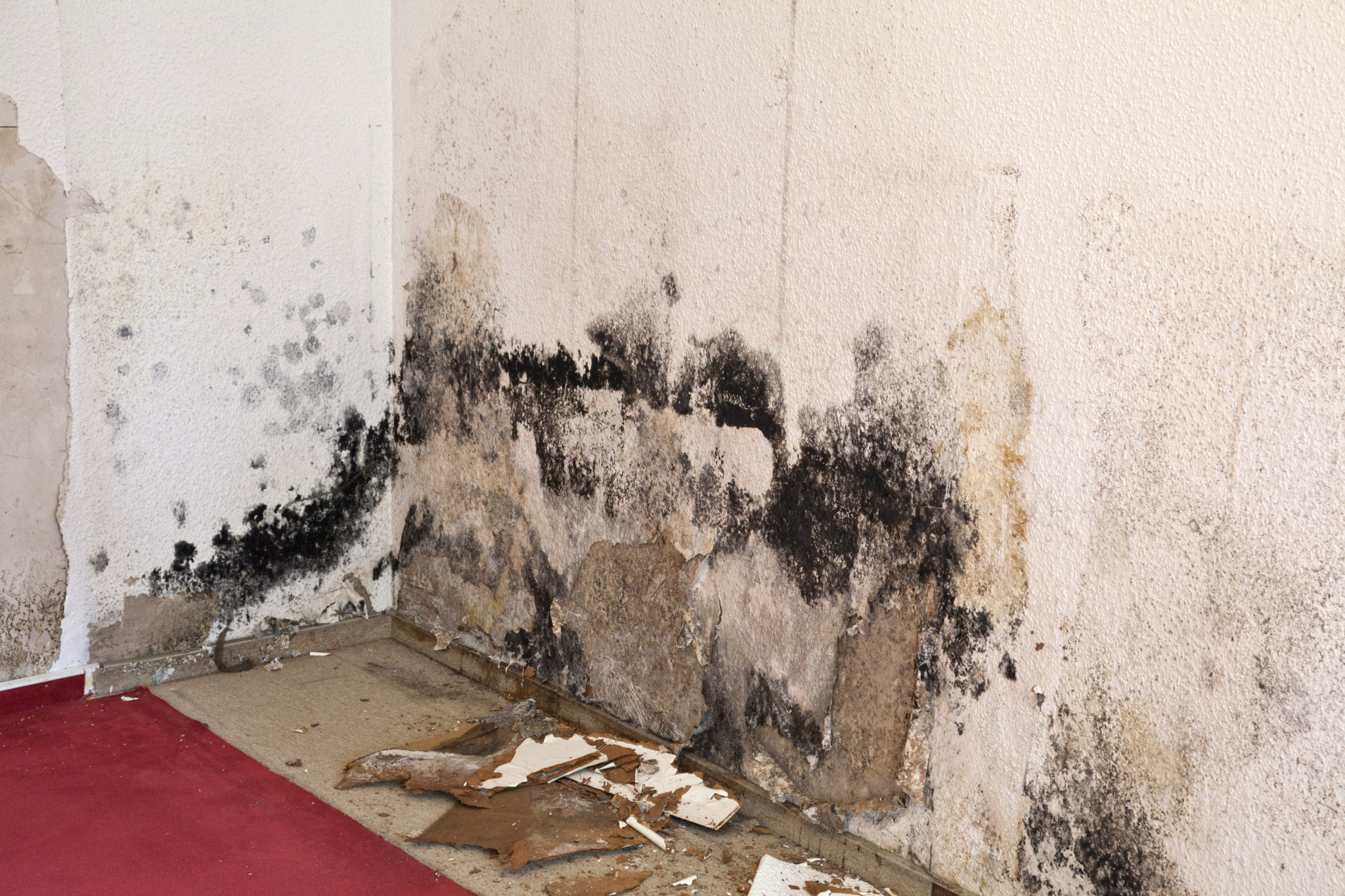 Hasgoe Mold Removal In Evansville Indiana